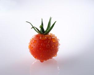 穫れたてミニトマトの写真素材 [FYI02986605]