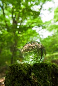 森に置かれた硝子の球体の写真素材 [FYI02986610]