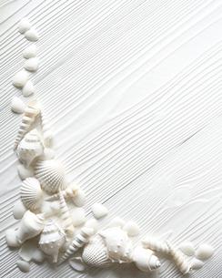 白い貝殻の写真素材 [FYI02986655]