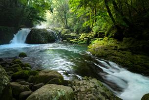 菊池渓谷 黎明の滝の写真素材 [FYI02986671]