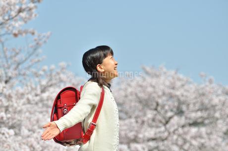 小学校を卒業する女の子(桜、青空、ランドセル)の写真素材 [FYI02986787]