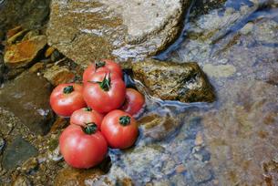 渓流で冷やされるトマトの写真素材 [FYI02986799]