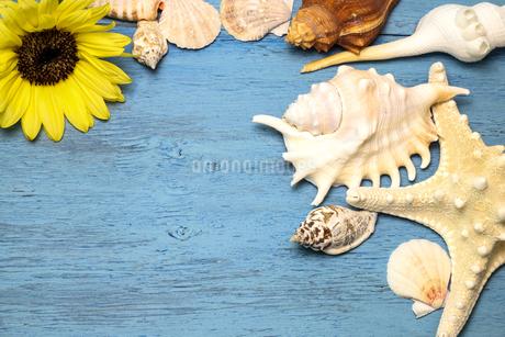 向日葵と貝殻の写真素材 [FYI02986802]