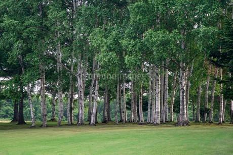 夏の広場の木々の写真素材 [FYI02986965]