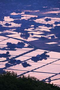 硫黄山より望む砺波平野の散居村の朝の写真素材 [FYI02987397]