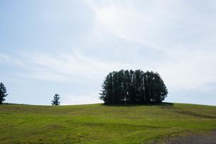 緑の丘の上のカラマツ林 美瑛町の写真素材 [FYI02987449]
