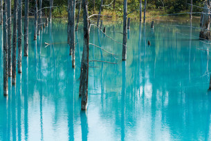夏の青い池 美瑛町の写真素材 [FYI02987454]