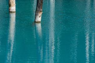 夏の青い池 美瑛町の写真素材 [FYI02987455]