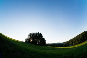 夕暮れの丘の上のカラマツ林 美瑛町の写真素材 [FYI02987457]