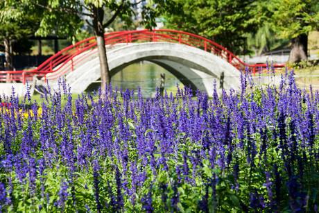 ラベンダーの花が咲く夏の都市公園の写真素材 [FYI02987460]