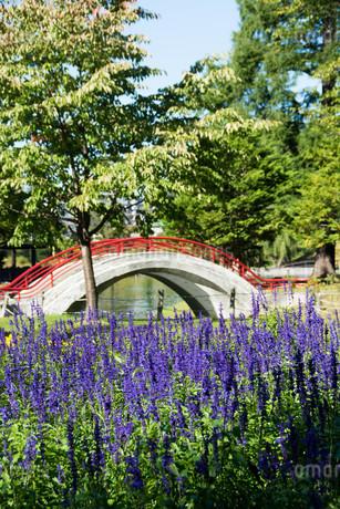 ラベンダーの花咲く夏の都市公園の写真素材 [FYI02987461]