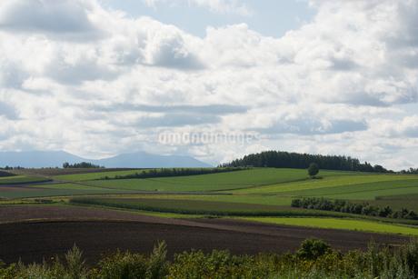秋の丘陵畑作地帯の写真素材 [FYI02987469]