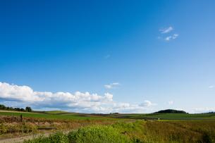 秋晴れの空と畑作地帯 美瑛町の写真素材 [FYI02987472]