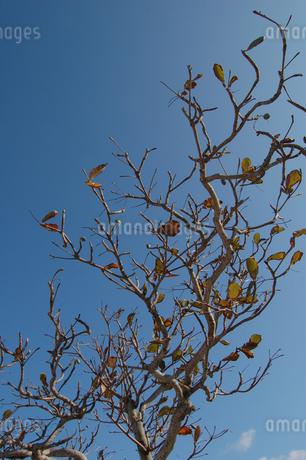 黄色くなった葉が残る木の写真素材 [FYI02987619]