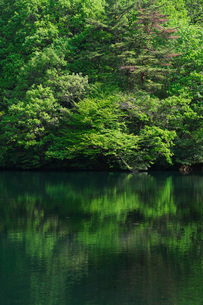 新緑の池の写真素材 [FYI02987837]