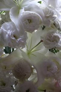 White Flowersの写真素材 [FYI02987905]