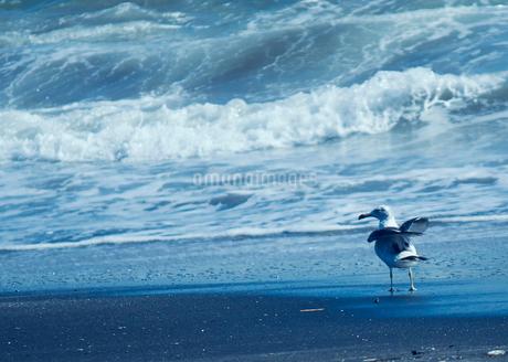 海とカモメの写真素材 [FYI02988156]