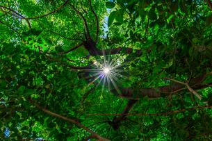 木漏れ日4の写真素材 [FYI02988220]