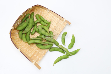枝豆の写真素材 [FYI02988244]