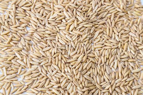 燕麦の写真素材 [FYI02988246]