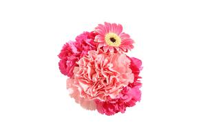 ガーベラとカーネーションの花の写真素材 [FYI02988252]