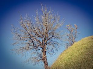 シュリーマンによって発見されたトロイ遺跡(トロイの考古遺跡として世界遺産に選定されるイリオス遺跡) の写真素材 [FYI02988386]