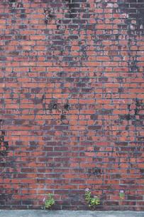 古い赤煉瓦の壁と少し生えた草花の写真素材 [FYI02988455]