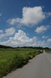 青空の入道雲と草原や畑の一本道の写真素材 [FYI02988462]