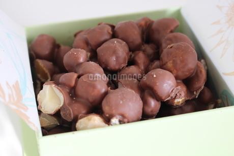 macadamia nutの写真素材 [FYI02988591]