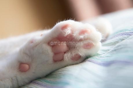 猫の肉球の写真素材 [FYI02988594]