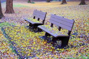 落ち葉が積もる公園のベンチの写真素材 [FYI02988615]