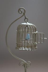 Blue Birdの写真素材 [FYI02988722]