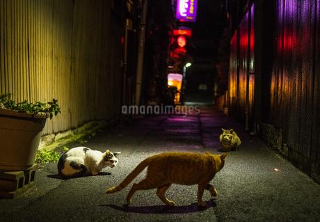 夜の路地と猫の写真素材 [FYI02988830]