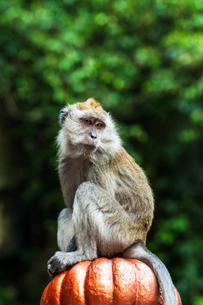 サルの写真素材 [FYI02989137]