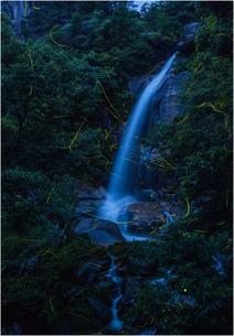 滝に舞うホタルの写真素材 [FYI02989203]