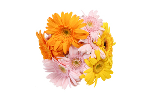 ガーベラの花束の写真素材 [FYI02989348]