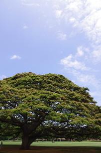 ハワイの木の写真素材 [FYI02989369]