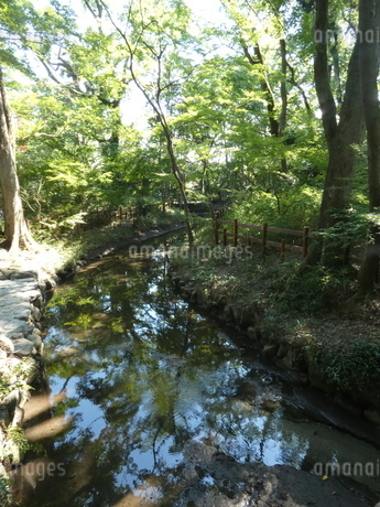 下鴨神社境内小川の写真素材 [FYI02989595]