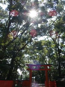 下鴨神社境内鳥居入り森林の写真素材 [FYI02989596]