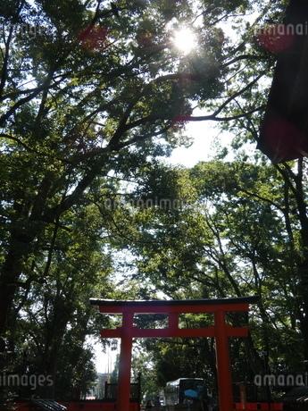 下鴨神社境内鳥居入り森林の写真素材 [FYI02989597]
