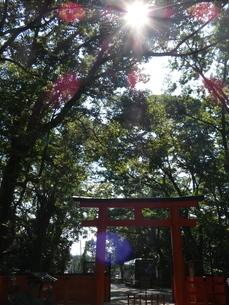 下鴨神社境内鳥居入り森林の写真素材 [FYI02989598]