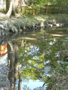 下鴨神社境内小川の写真素材 [FYI02989600]