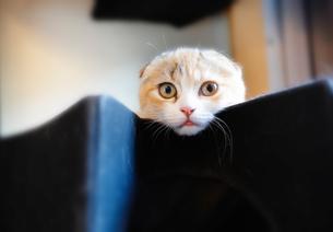 三毛猫の写真素材 [FYI02989626]