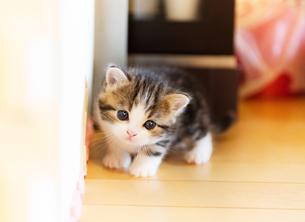 かわいい子ねこの写真素材 [FYI02989662]
