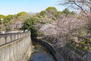 哲学堂公園の桜の風景の写真素材 [FYI02989663]