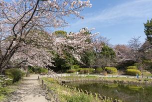 哲学堂公園の桜の風景の写真素材 [FYI02989667]