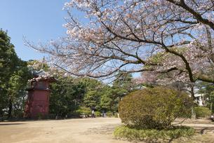 哲学堂公園の桜の風景の写真素材 [FYI02989668]