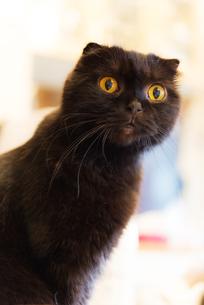 黒猫の写真素材 [FYI02989715]