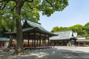 大宮氷川神社の風景の写真素材 [FYI02989733]