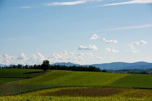 秋の畑作地帯と青空の写真素材 [FYI02989772]